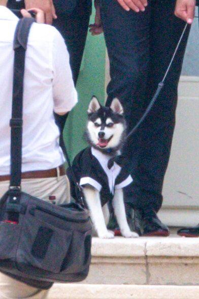 Mascota de Sophie Turner y Joe Jonas se roba atención de la boda